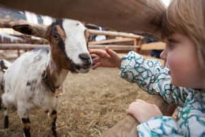 Stowe Farm MA