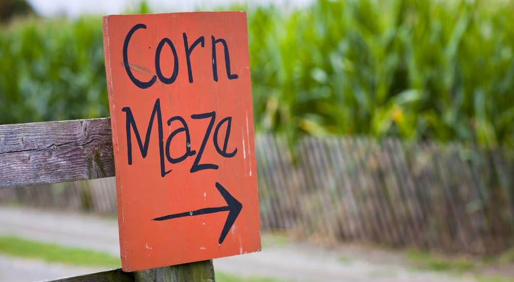 A red corn maze sign is pointing right. Try the maze after checking out used Ford trucks.