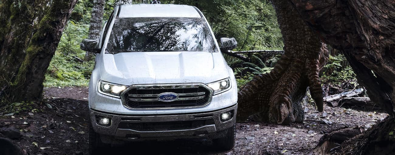 A white 2020 Ford Ranger, which wins when comparing the 2020 Ford Ranger vs. 2020 Toyota Tacoma, is driving under a large tree in the woods.