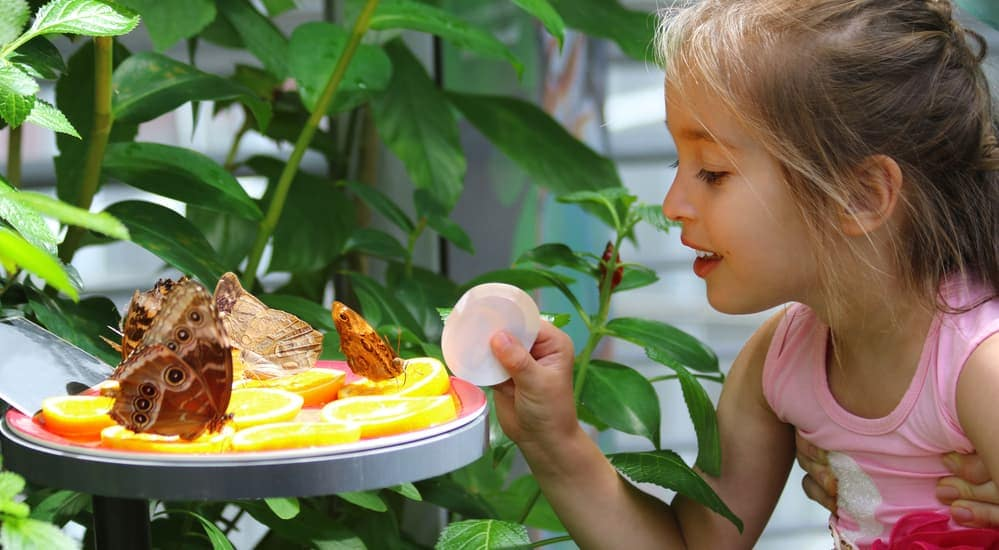 A little girl is looking at butterflies at a butterfly show in Cincinnati, OH.