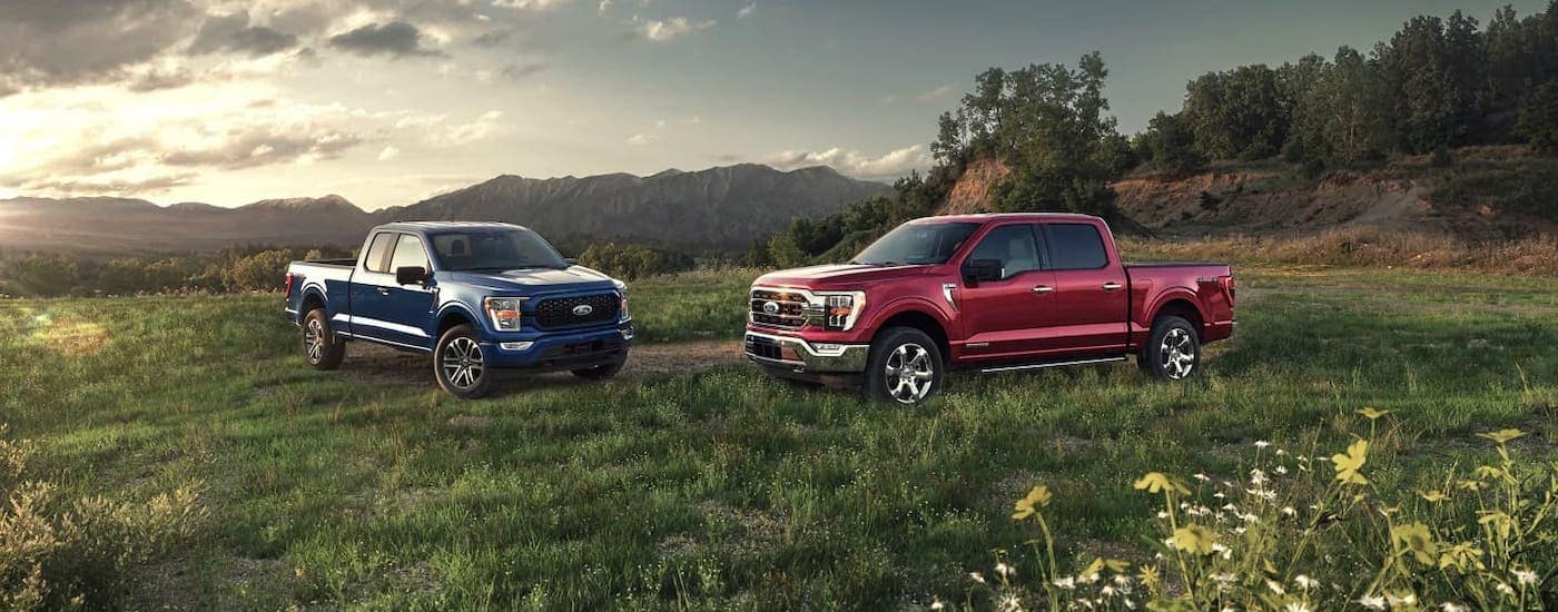 A blue and a red 2021 Ford F-150 are parked in a meadow after winning the 2021 Ford F-150 vs 2021 Chevy Silverado 1500 comparison.